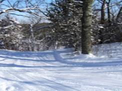 Image for McMiller Ski Trails